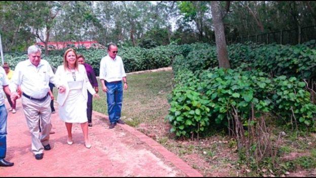 Arborización con Algodonillo