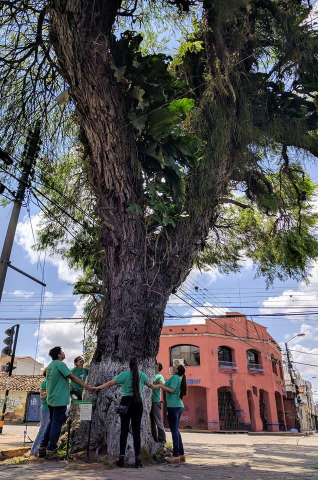 Voluntarios del Colectivo Árbol