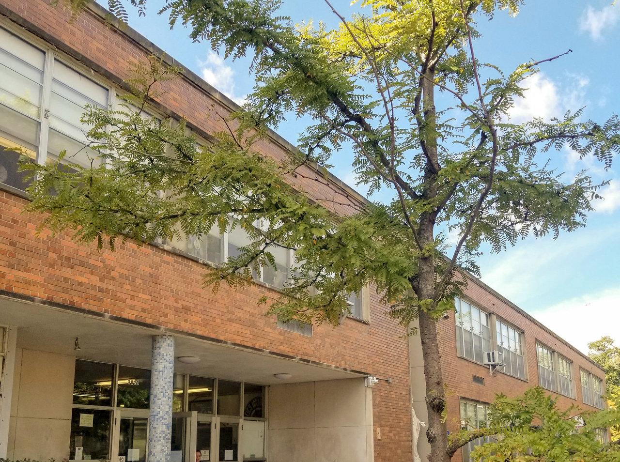Árboles en escuelas primarias