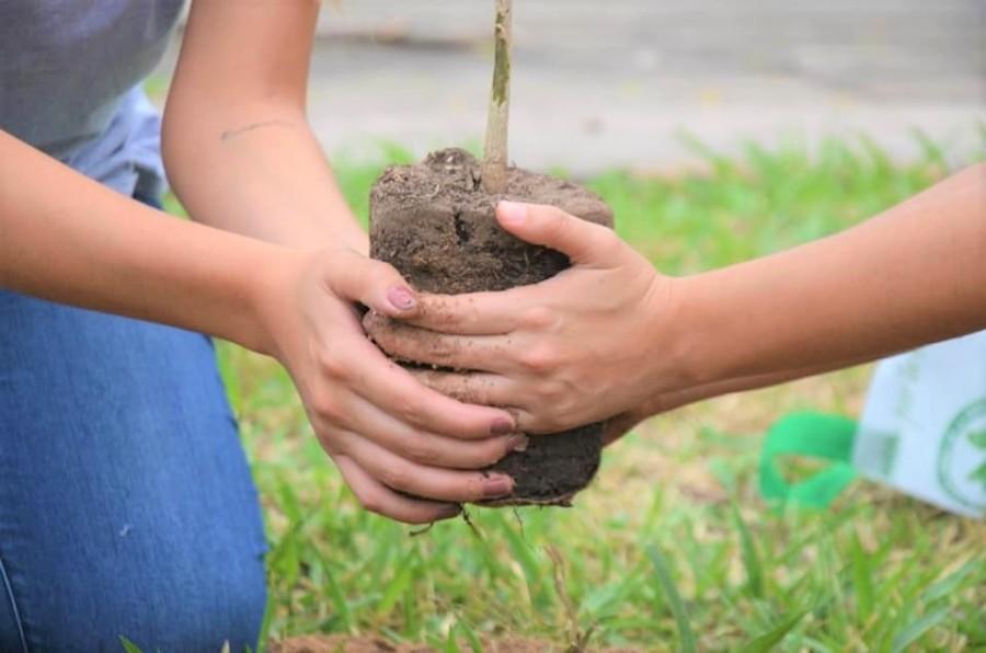 Directrices arborización exitosa - Especies adecuadas