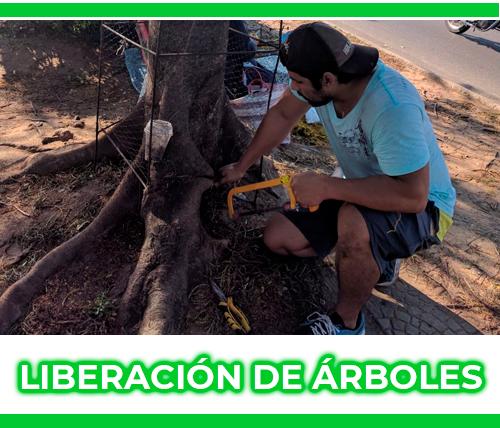 liberación de árboles.png