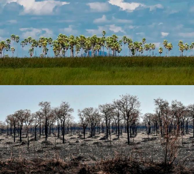 Área afectada en el Parque Nacional Otuquis, en la ecorregión del Pantanal.